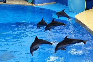 Full Day Ocean Park Tour Packages