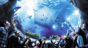 Skip The Line Tour : Ocean Park Hong Kong Admission Packages